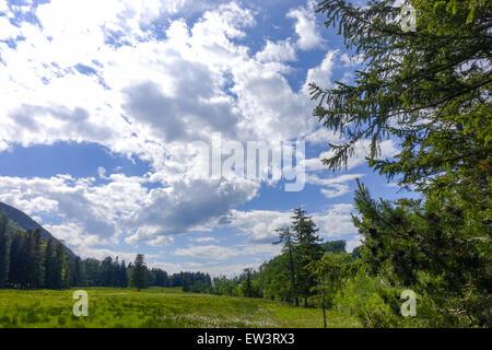 Alpine pasture, Maumau-Wiese, Losenheim, Schneeberg, Lower Austria, Austria - Stock Photo