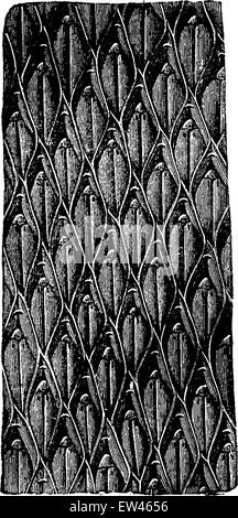Lepidodendron bark aculeatum, vintage engraved illustration. Earth before man – 1886. - Stock Photo