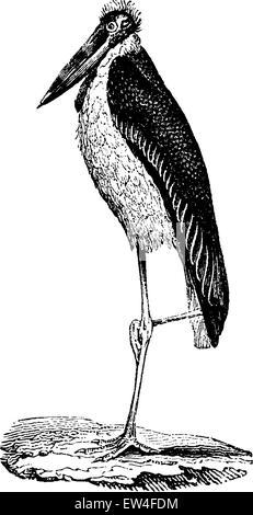 Stork Bag, vintage engraved illustration. Natural History of Animals, 1880. - Stock Photo