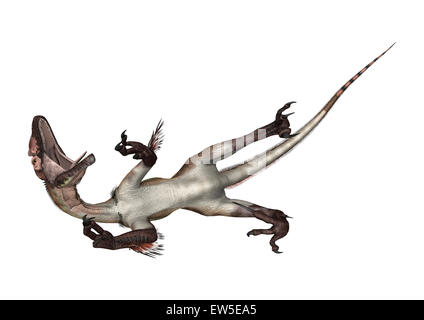 3D digital render of a dinosaur utahraptor isolated on white background - Stock Photo