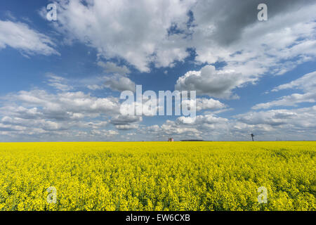 Blooming Cornfield in Front of BER Airport , Clouds, Berlin Schoenefeld - Stock Photo