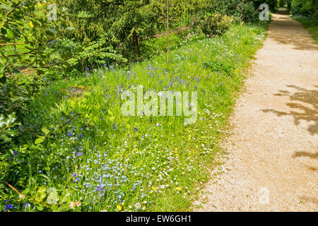 OXFORD CITY MAGDALEN COLLEGE ADDISONS WALK AROUND THE MEADOWS WITH SPRINGTIME FLOWERS AND BLUEBELLS - Stock Photo