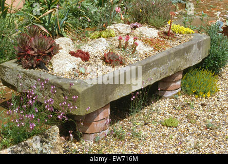 Merveilleux Stone Garden Sinks Planted With Alpines; Close Up Of Old Stone Sink Planted  With Alpines   Stock Photo