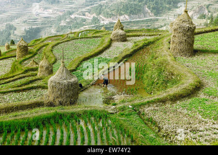 Terraced fields in Dong village, Tang'an, Guizhou Province, China - Stock Photo