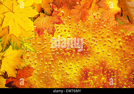 Autumn leaves frame with water drops - Stock Photo