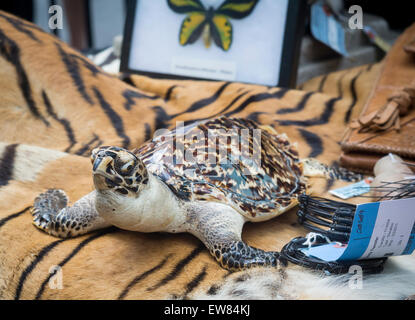 New York, USA. 19th June, 2015. A stuffed tortoise and other endangered species in Times Square in New York at the - Stock Photo