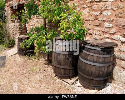 Old cider barrels and an apple tree against the side of a barn, UK - Stock Photo