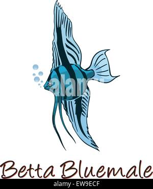 Betta, Color Illustration - Stock Photo