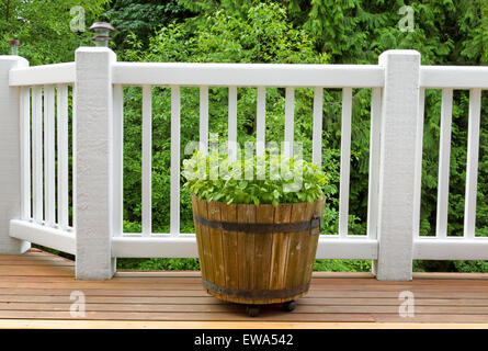Fresh basil plants, in large wooden barrel, on cedar deck with woods in background. - Stock Photo