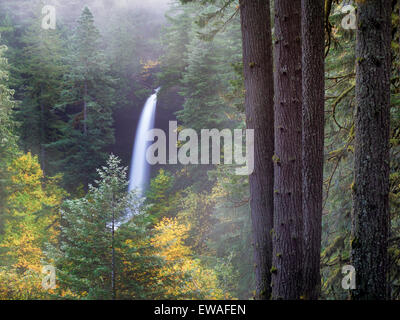 North Falls with fog and fall color. Silver Falls State Park, Oregon - Stock Photo