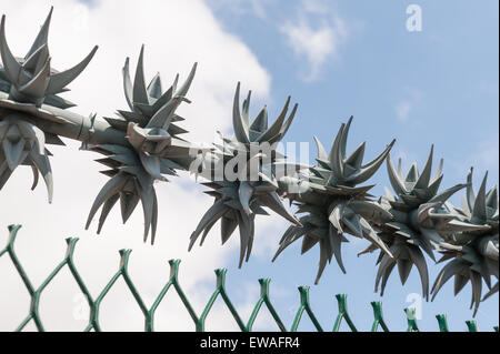 Spiked rotating anti climb system and risk of injury wound or puncture cut from sharp metal nylon Cacti Spikes - Stock Photo