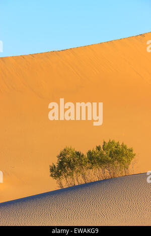 Sunrise in the Mesquite Flat Sand Dunes in Death Valley National Park in California, USA - Stock Photo