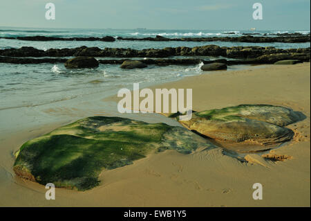 Durban, KwaZulu-Natal, South Africa, moss covered exposed rocks in tidal zone on rocky beach of Umhlanga Rocks - Stock Photo
