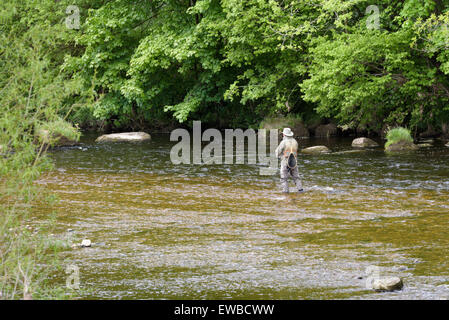Elderly man fly fishing in the River Wharf, near Bolton Abbey, North Yorkshire, England. - Stock Photo