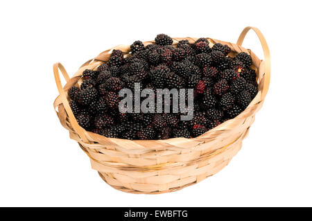 Fresh blackberries overflowing in wicker basket isolated on white - Stock Photo