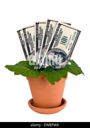 Money plant using U. S. dollars in clay pot isolated on white - Stock Photo