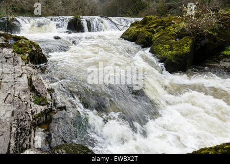Cenarth Falls, Ceredigion, Wales - Stock Photo