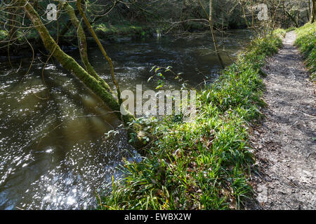 Footpath beside the River Teifi at Cenarth, Ceredigion, Wales - Stock Photo