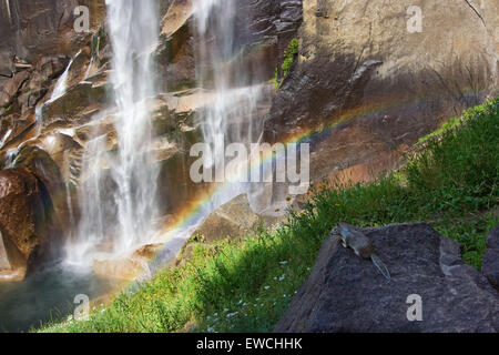 SQUIRREL ADMIRING RAINBOW made by Nevada Fall in Yosemite National Park - Stock Photo