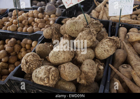 The Jerusalem artichoke for sale at the farmers market in Park Slope, Brooklyn, NY,  also called sunroot, sunchoke, - Stock Photo