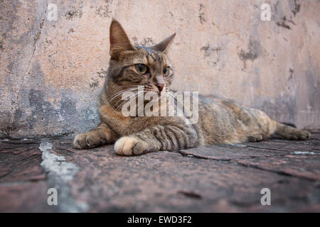 Pretty tabby cat laying outside against old building - Stock Photo