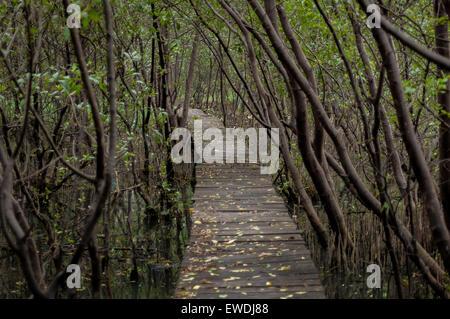 Footbridge across mangrove forest at Muara Angke wildlife sanctuary, Jakarta. © Reynold Sumayku - Stock Photo