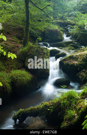 Water flowing through a rocky creek in a dense green forest. - Stock Photo