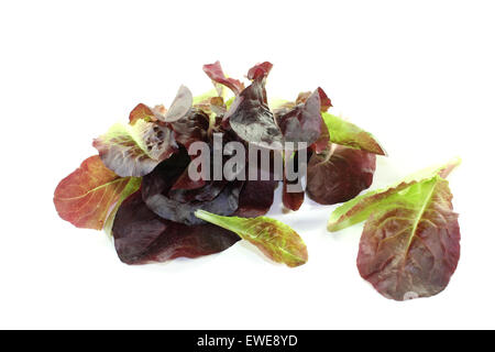 fresh crunchy red lettuce on a bright background - Stock Photo