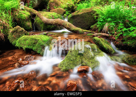 Stream gently cascading down a mountain forest, with small waterfalls in the foreground and fresh green fern in the background