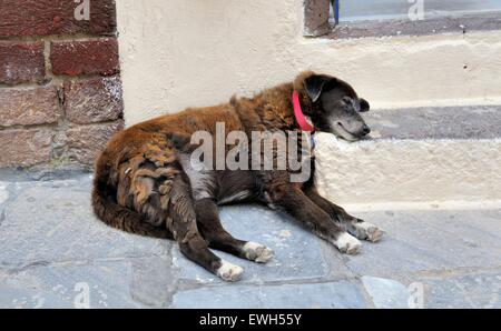 A dog resting it's head on a step fast asleep in the village of Oia Santorini Greece - Stock Photo