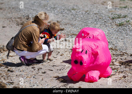 Morecambe, Lancashire, UK 27th June, 2015. William Rippon (Model Released) 23 months old, inspecting inflated animal ground tethered little ground bouncer pink pigs,  at the Catch The Wind Kite Festival an annual event on Morecambe seafront, when for the whole day the skies are full of the most spectacular shapes, colours and creations. Stock Photo