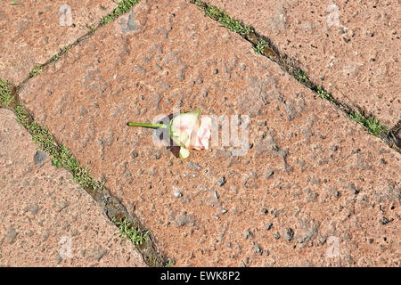 weeds in block paving path wfl038426 stock photo royalty free image 113543275 alamy. Black Bedroom Furniture Sets. Home Design Ideas