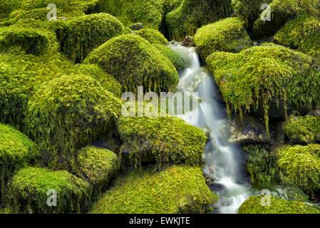 Moss covered rocks and stream. Opal Creek Wilderness, Oregon - Stock Photo