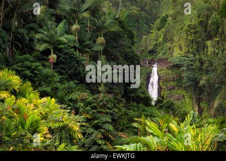 Akaka Falls. Akaka Falls State Park. Hawaii, The Big Island - Stock Photo