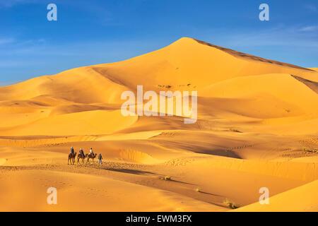 Camel caravan, Erg Chebbi desert near Merzouga, Sahara, Morocco - Stock Photo