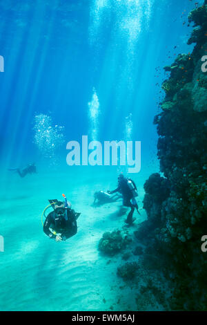 Scuba divers underwater, Marsa Alam Reef, Red Sea, Egypt - Stock Photo