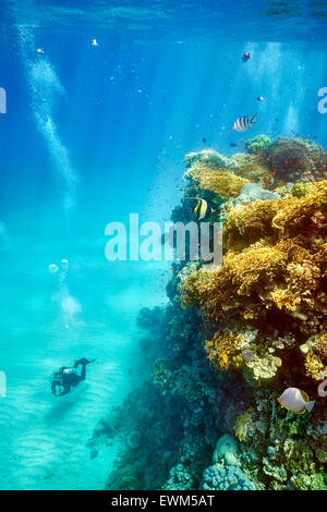 Single scuba diver, Marsa Alam Reef, Red Sea, Egypt - Stock Photo