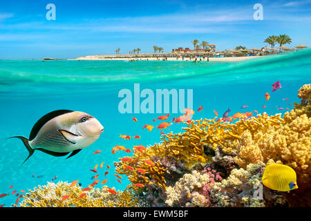 Red Sea, Egypt - underwater view at fishes and coral reef, Marsa Alam - Stock Photo