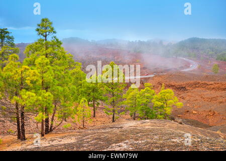 Volcanic landscape, Teide National Park, Tenerife, Canary Islands, Spain - Stock Photo