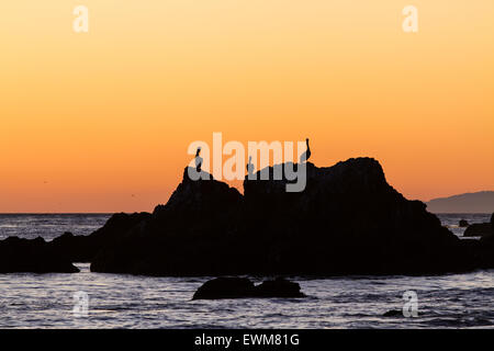 Three pelicans on a rock are silhouetted by an orange sunset sky in Malibu, California. - Stock Photo