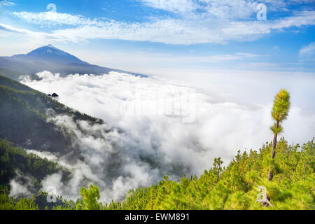 Tenerife - Teide Volcano Mount above sea of clouds, Canary Islands, Spain - Stock Photo