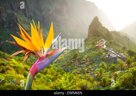 View at Strelitzia and Masca village, Tenerife, Canary Islands, Spain - Stock Photo