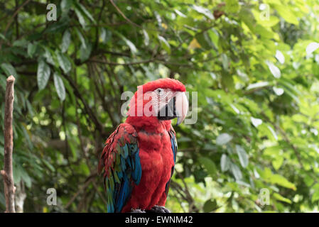 parrot in the jungle - Stock Photo