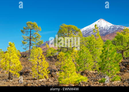 Tenerife - view of Teide Mount, Canary Islands, Spain - Stock Photo