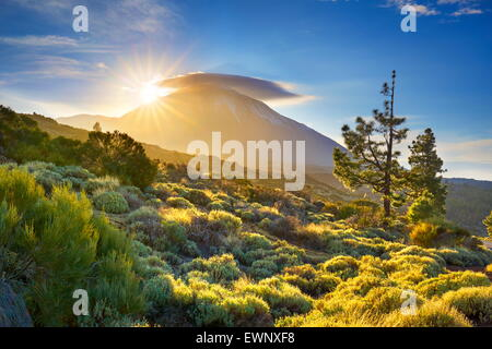 Teide National Park at sunset, Tenerife, Canary Islands, Spain - Stock Photo
