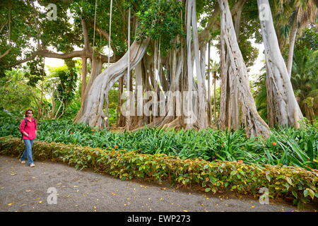 Old Fig Tree Stock Photo, Royalty Free Image: 16336601 - Alamy