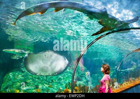 The Shark and Stingray, aquarium in Loro Parque, Puerto de la Cruz, Tenerife, Canary Islands, Spain - Stock Photo