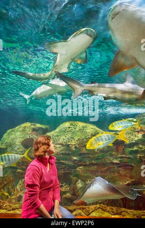 Sharks, aquarium in Loro Parque, Puerto de la Cruz, Tenerife, Canary Islands, Spain - Stock Photo