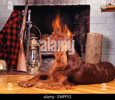 Irish setter resting in front of a fireplace - Stock Photo