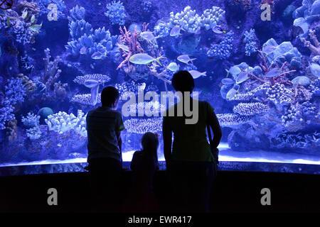 people look at a large aquarium - Stock Photo